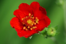 flower_red_green