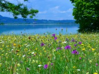 meadow_flowers_bloom