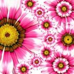 summer_pink_flower