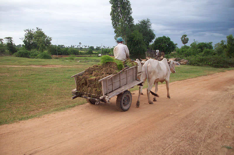 simple Cambodian country life