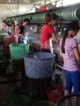silk farm, the women earn 6$ a day